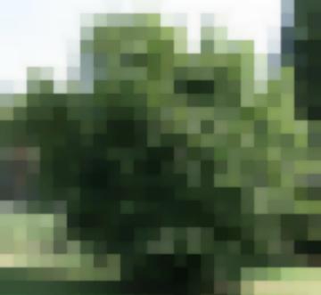 Сорта Деревьев Лещина (Орешник)