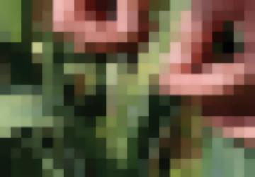 Огородные Вредители Луковая Моль