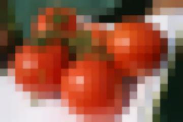 Томат Машенька – Популярный Классический Сорт