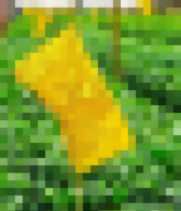 Защита Огорода И Сада-Делайте Ловушки