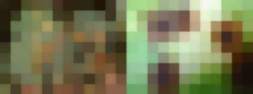 Болезни Овощных Культур(Болезни Томата)Вершинная Гниль