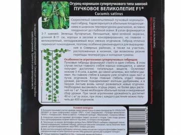 оборот семян Пучкового великолепия с условиями конкурса