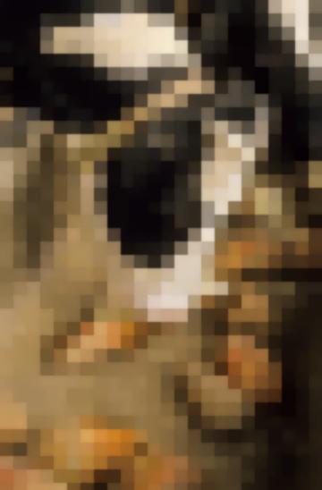 Кормление Крупного Рогатого Скота Корнеплоды, Клубнеплоды И Бахчевые