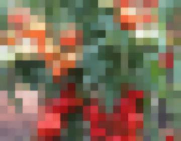 Томат Интуиция — Урожайный Гибрид Отечественной Селекции