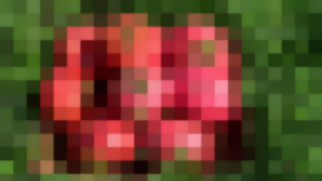 Томат Розмарин F1: Крупноплодный Гибрид Для Теплиц