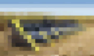 Кукурузная Жатка