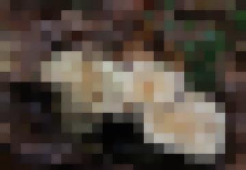 Чешуйчатка Клейкая