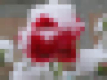 Роза-Королева Садов