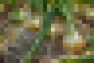 Огородные Вредители Луковый Корневой Клещ