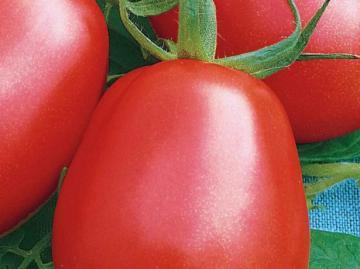 Семена томата Рио Гранде