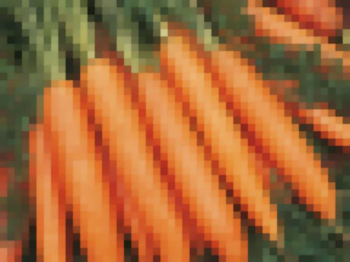 Сорт моркови Бангор